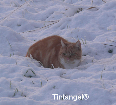 Poes in de sneeuw