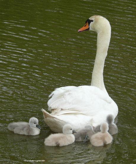Zwemmen met moeder blog
