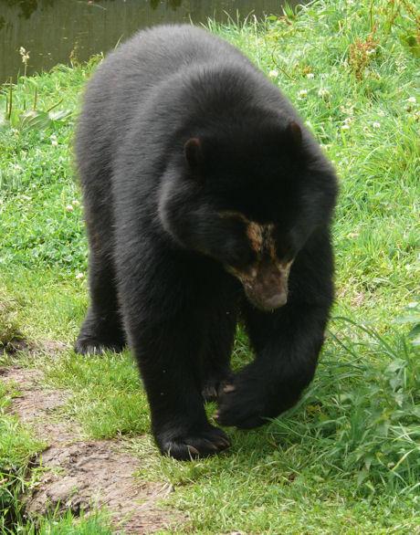 Andeanbeer blog