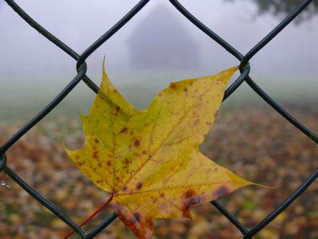 Stal in de mist blog