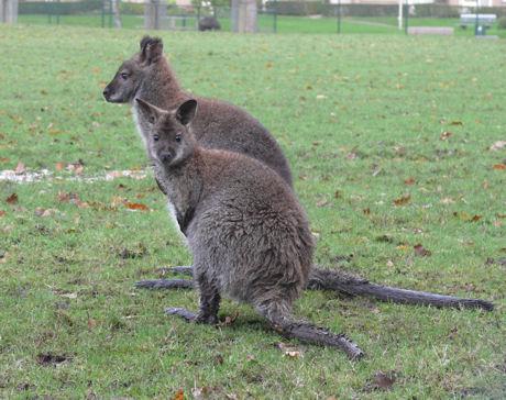 Sydney en Ascha 2 blog