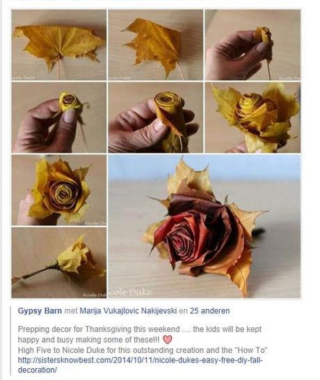 Bladrozen op facebook