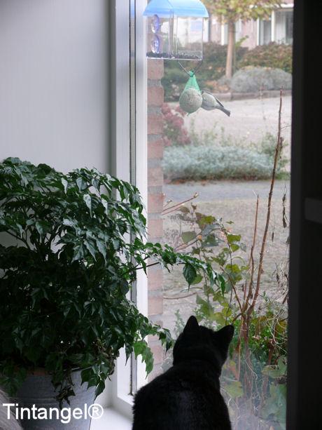 Figaro loert 2