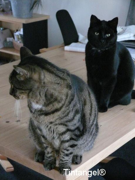 Buck en Figaro