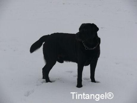 Troy in de sneeuw