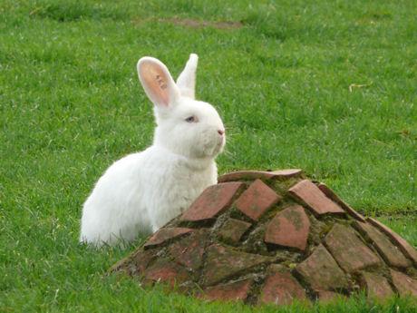 Wit konijn dierenweide blog