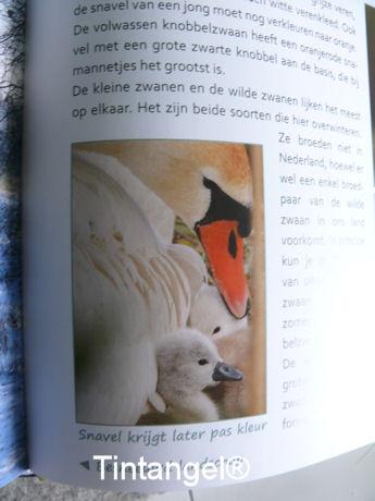 Zwaantjes in boek