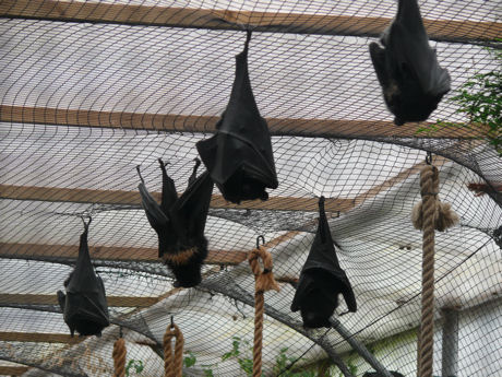 Fruit bats blog