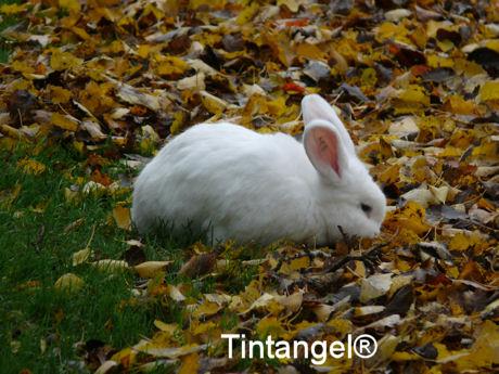 Wit konijn blog
