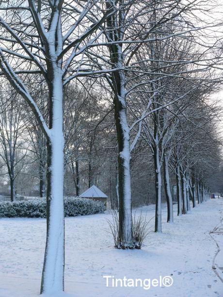 Besneeuwde bomen blog