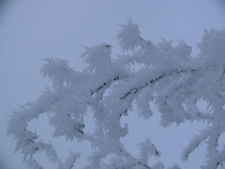Winter g