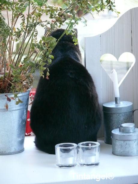 Figaro braaf