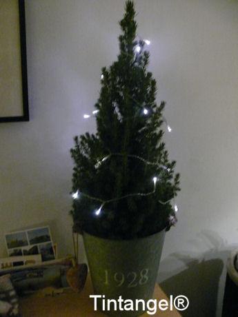 Kleine boom
