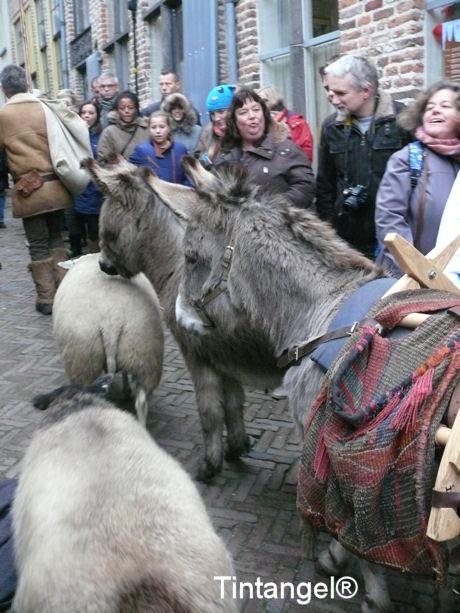 Ezels en schapen blog