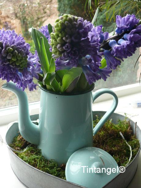 Hyacinthen
