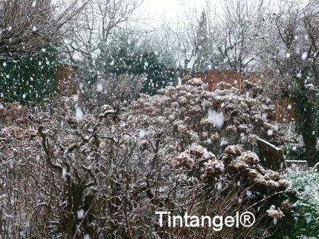 Sneeuw 3