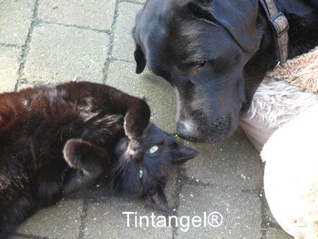 Figaro en Troy