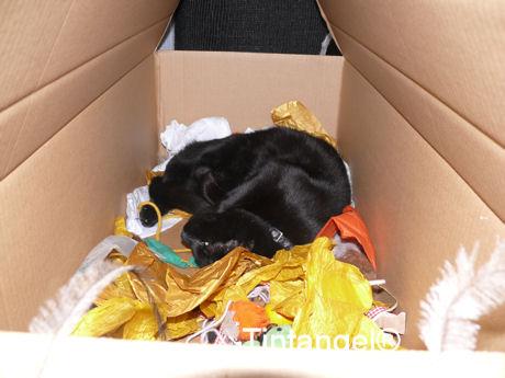 Figaro in doos