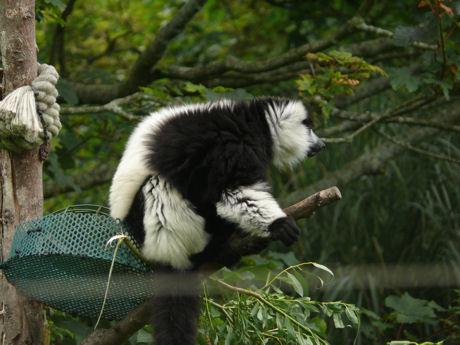 Lemur 2 blog
