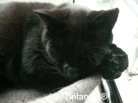 Figaro slaapt
