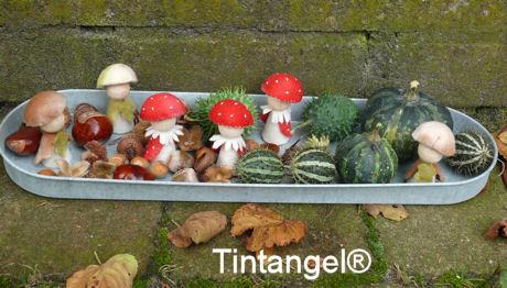 Paddestoeltjes Tintangel blog