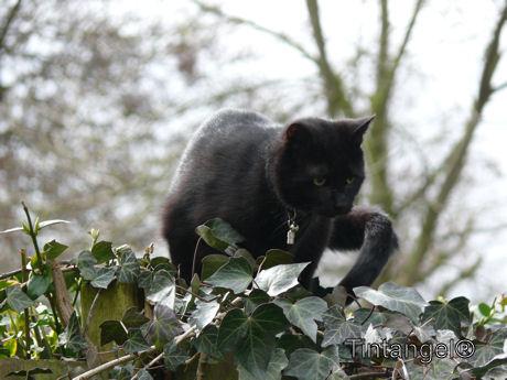 Figaro (6)