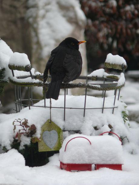 Sneeuw 8