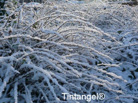 Takjes vol sneeuw