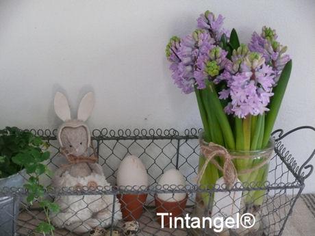 Hips en Hyacinthes
