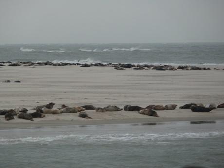 Zeehonden 7