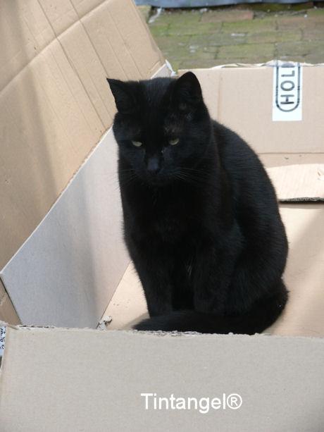 Figaro in de doos