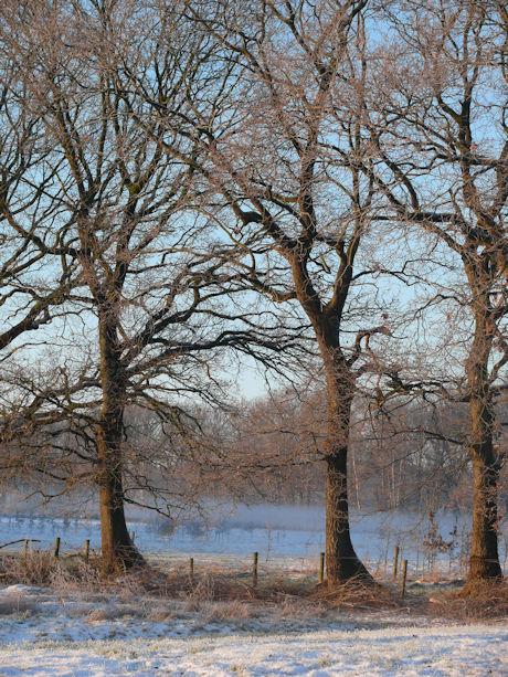 A winter 5 b