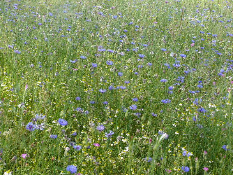 Bloemenweide 2